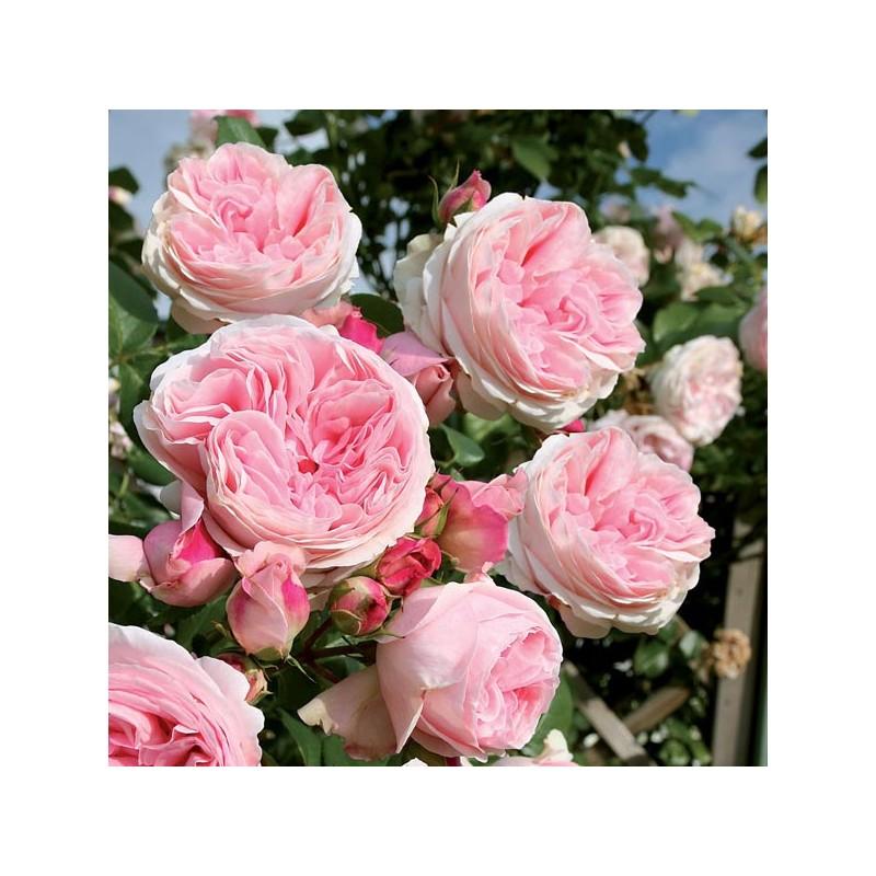 rosier l 39 alhambra