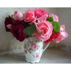 Lot de 5 rosiers nouveautés