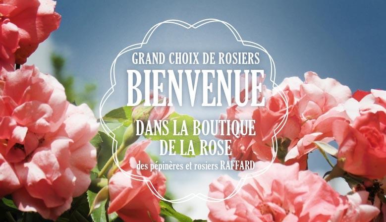 grand choix de rosiers