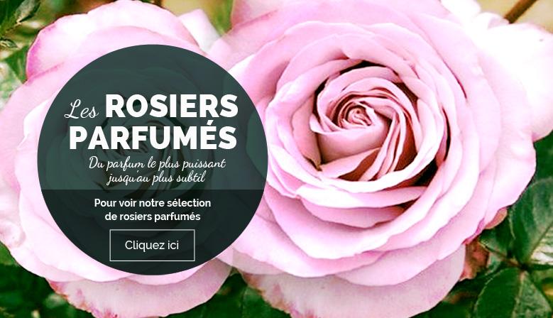rosiers parfumes