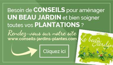conseils jardins plantes